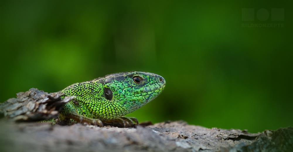 Noch ein grüner Freund