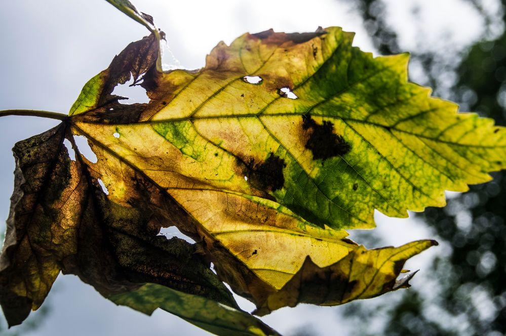 Noch ein Herbstbote