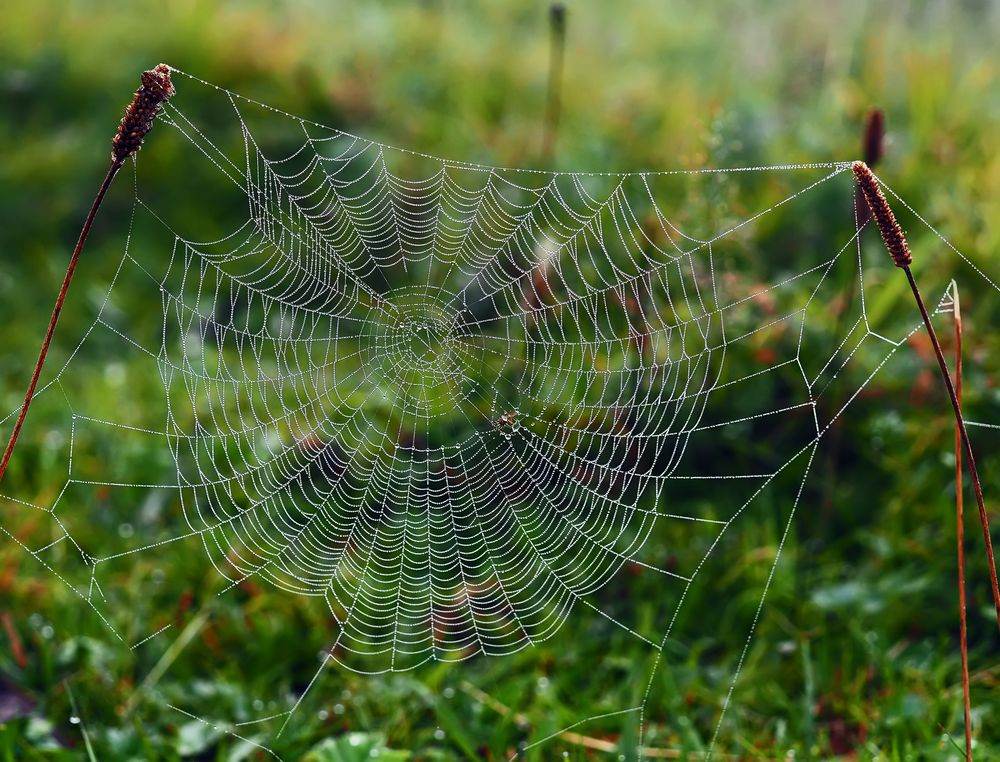 Noch ein Herbstfoto: der Nebel hat mir dieses Foto geschenkt! - C'est un cadeau de l'automne...