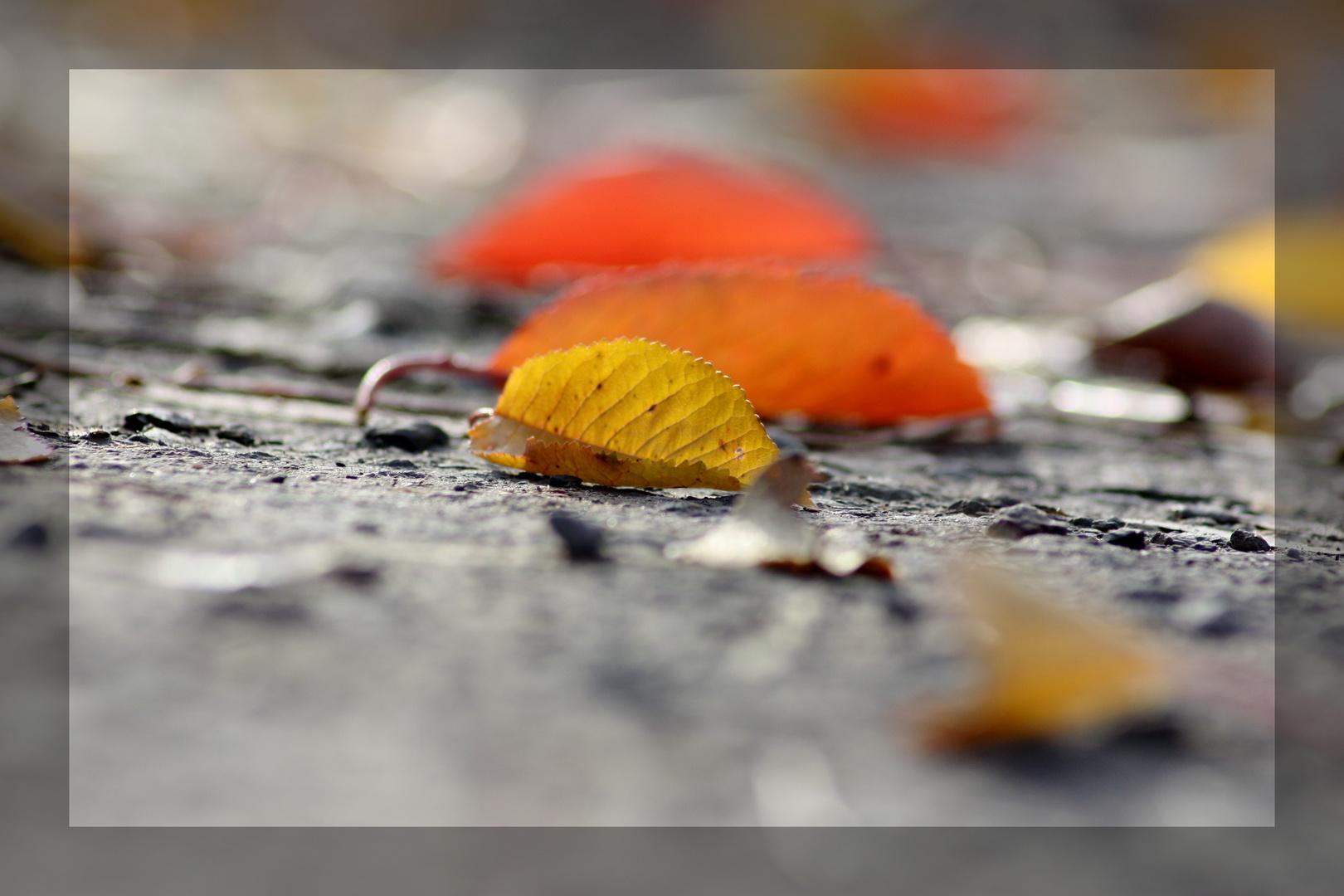 Noch ein Herbstzeit-Beitrag!