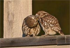 Noch ein Küsschen