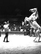 noch ein Pferd