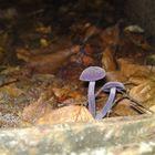 noch ein Pilz :-)
