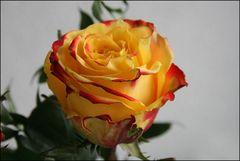 Noch ein Rosengruß