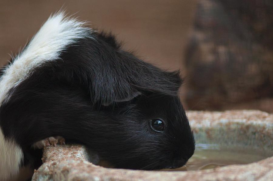 noch ein Schweinchen