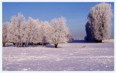 Noch ein Winterfoto....