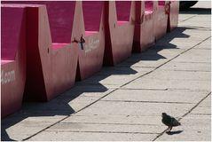 Noch eine einsame Taube