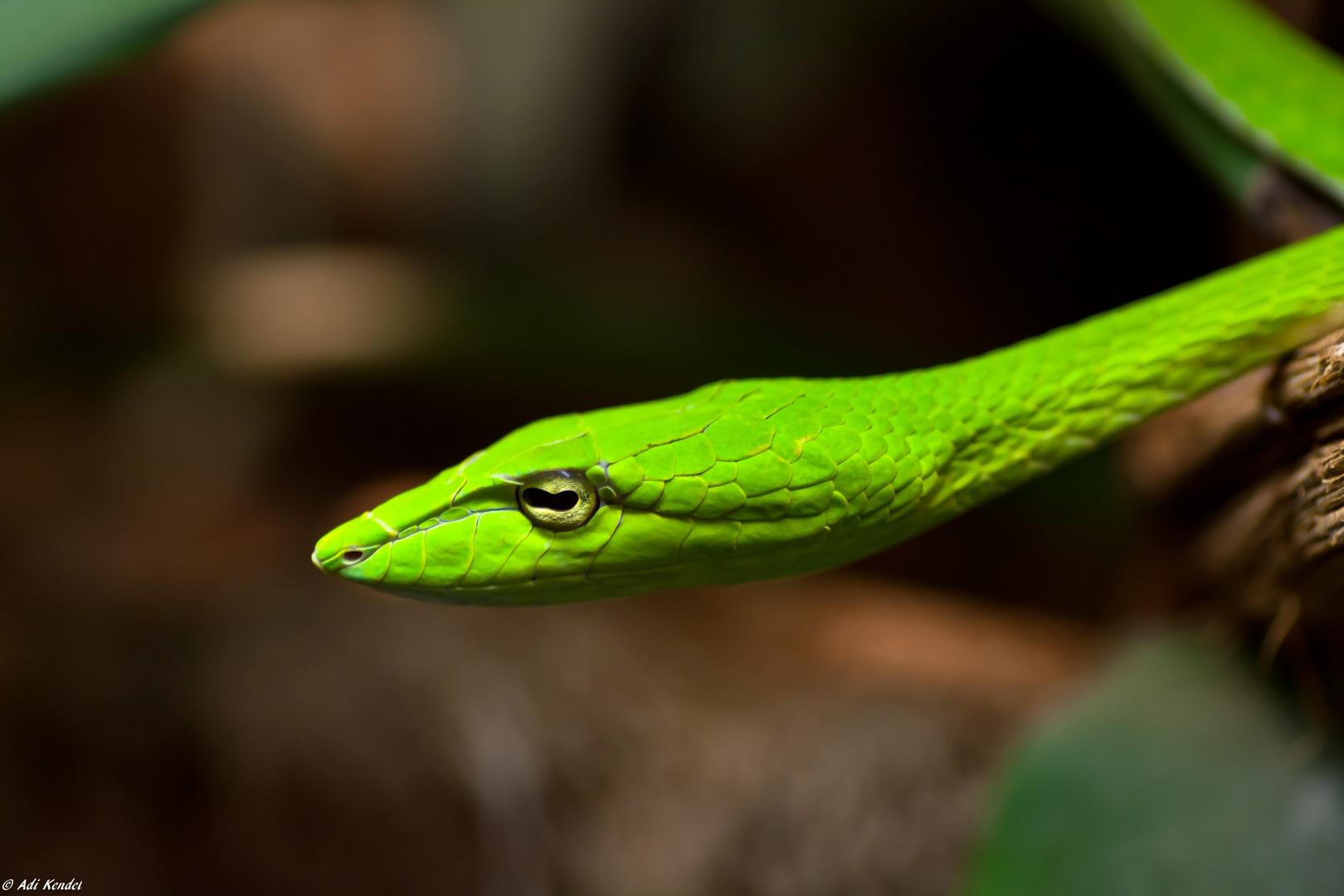Noch eine grüne Schönheit