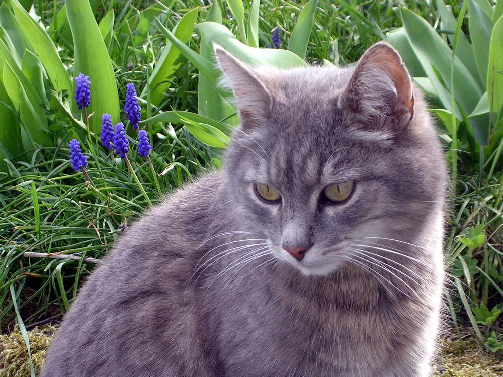 noch eine Katze