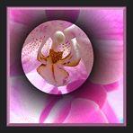 ...noch eine Orchidee ...... (reloaded)