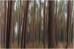 noch eine Waldspielerei