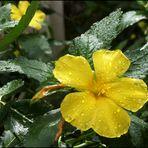 Noch eine wunderschöne Blume! Ich nenne sie Doro!