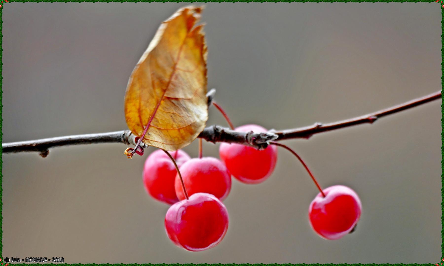 Noch einmal - Japanische Zieräpfel  ..