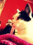 Noch einmal meine Katze