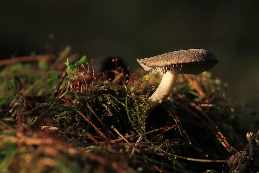 Noch gibt es Pilze