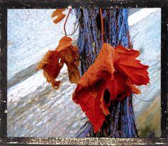 Noch immer Herbstblätter