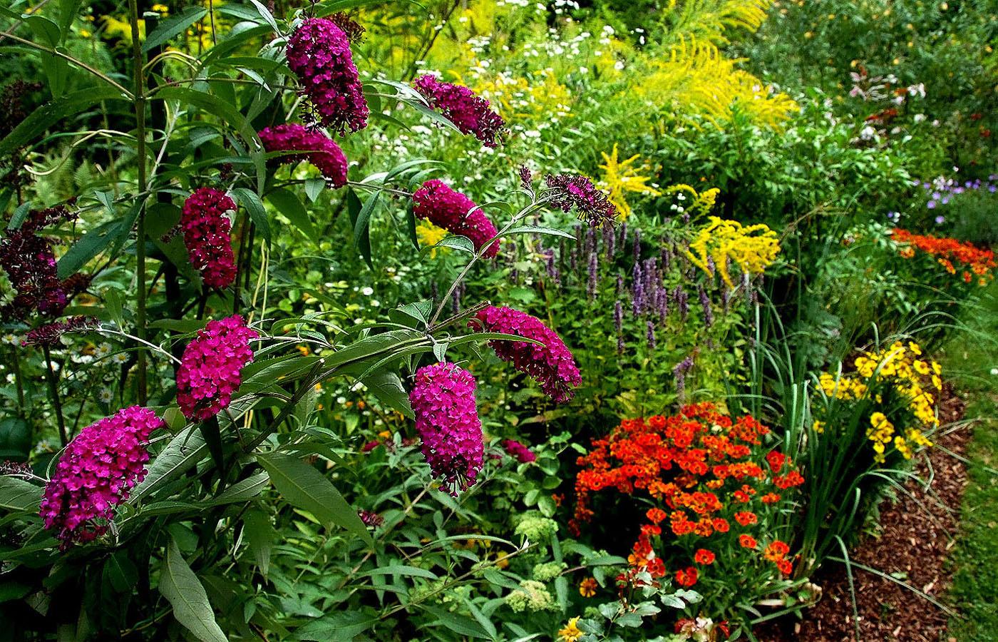 Noch ist es bunt in meinem Garten, ....