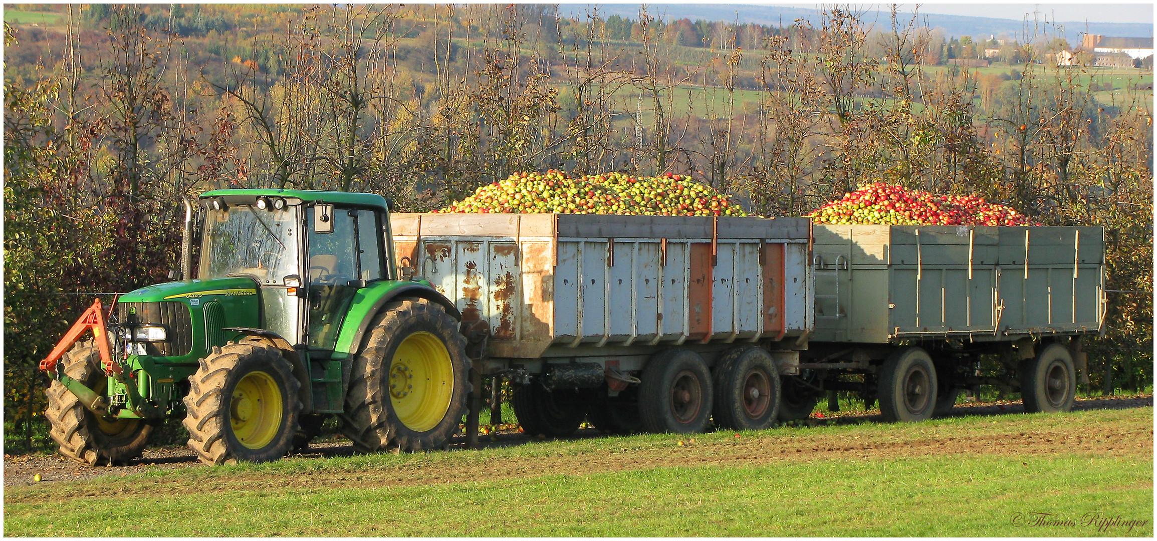 Noch mal eine Ladung für Apfelsaft...