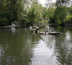 Noch mal in Bild aus dem Leipziger Zoo