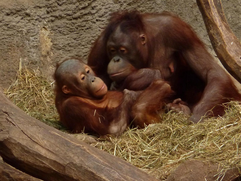 Noch mehr Affenliebe