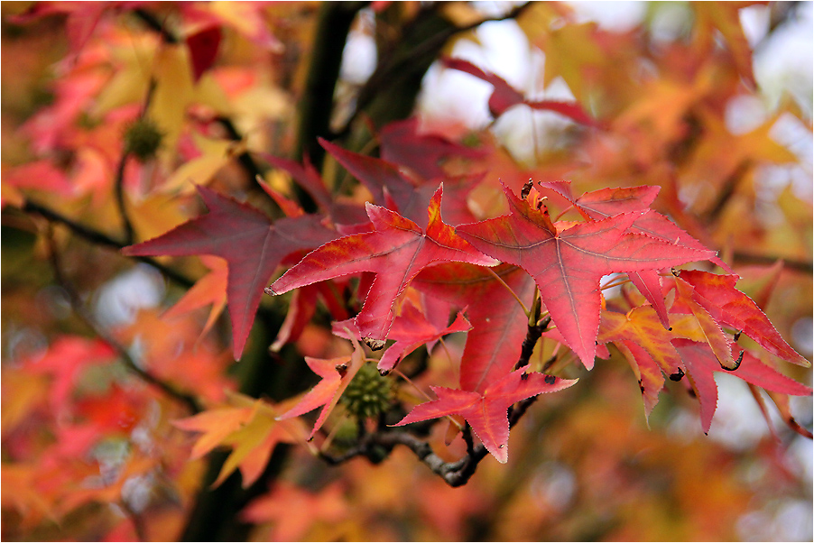 Noch mehr Blätter