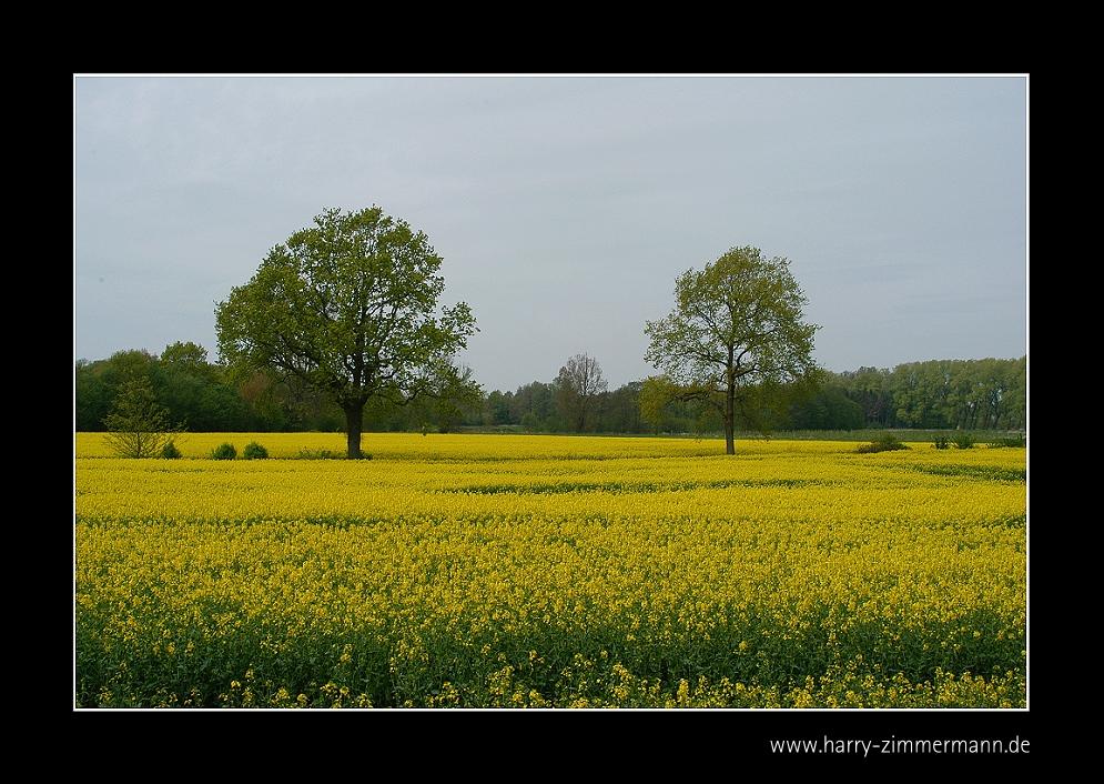 noch mehr gelb