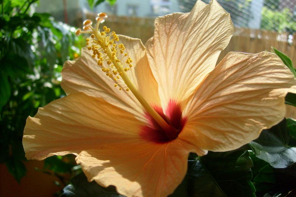 Noch mehr meiner Lieblingsblume...