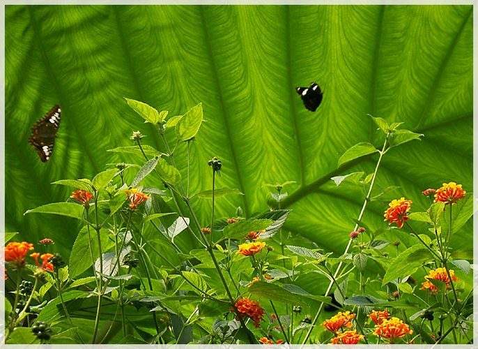 noch mehr Schmetterlinge
