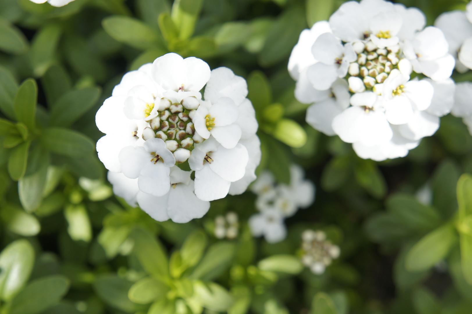 Noch mehr schöne Blumen...^^