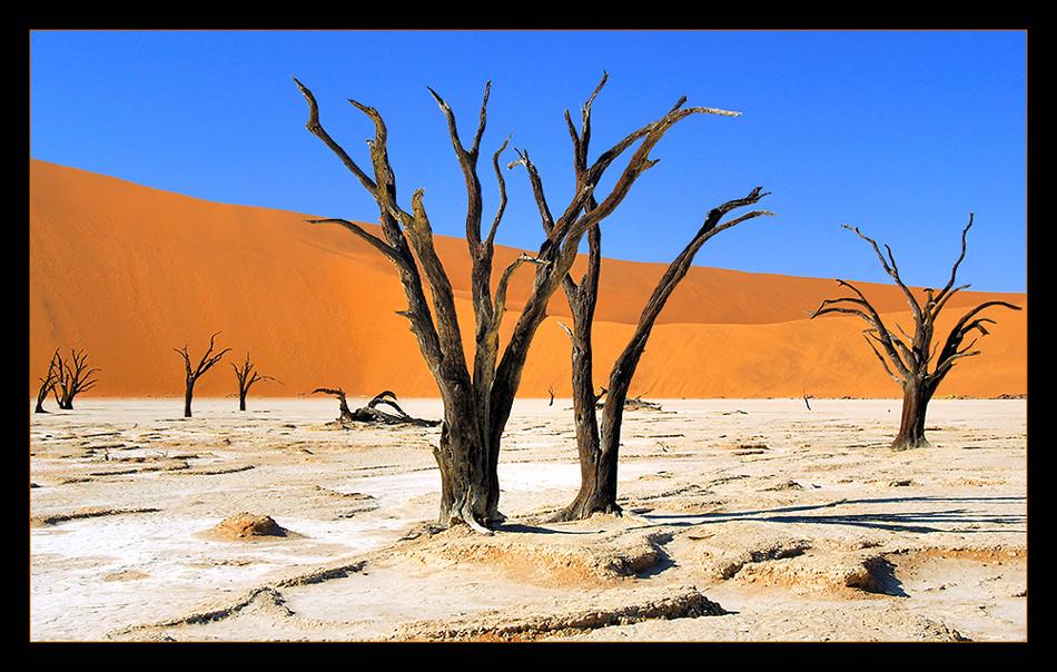 noch mehr tote Bäume