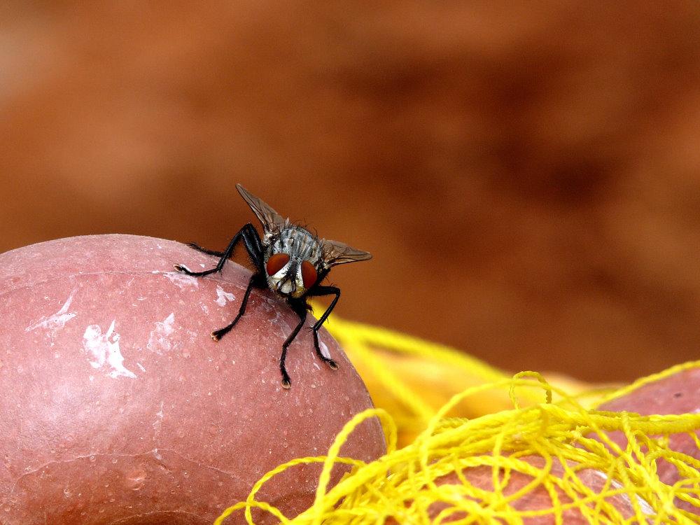 noch ne` Fliege