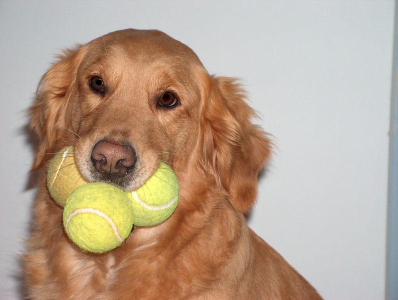 ...noch `nen Ball und ich hab`die Schnauze voll...