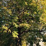 Noch sind alle Blätter dran