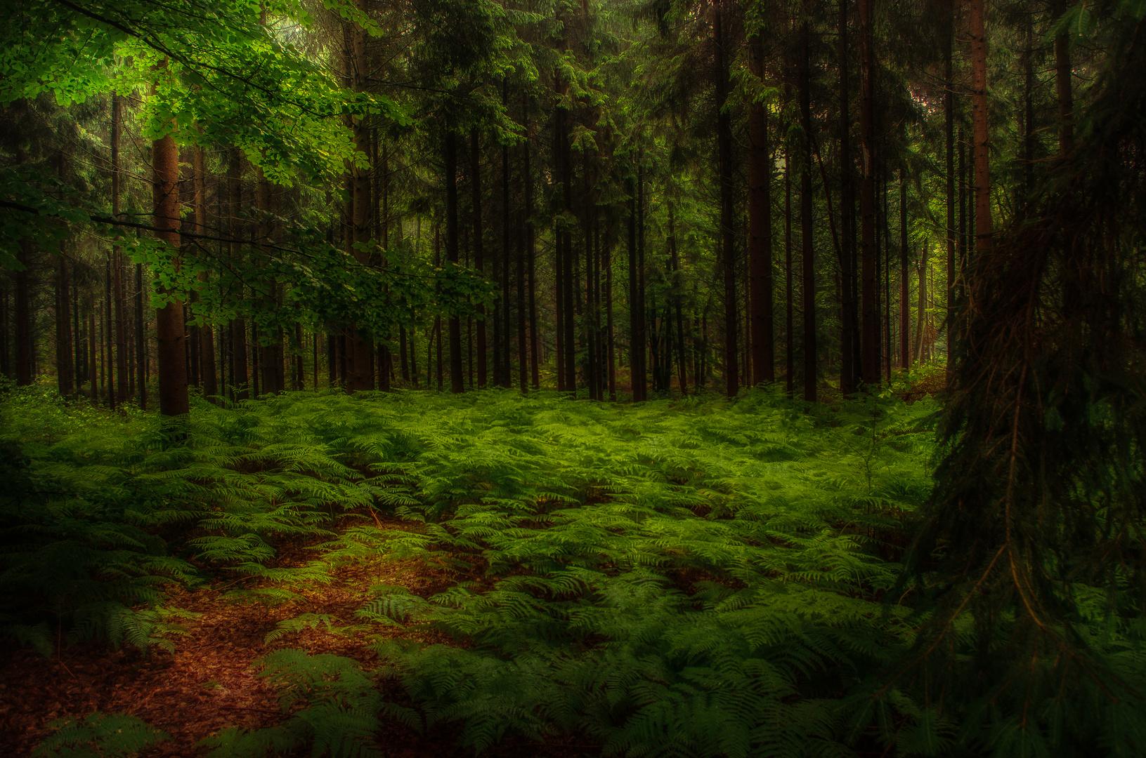 Noch tiefer im Wald.....