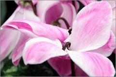 ... noch was aus der Blumenkiste ...