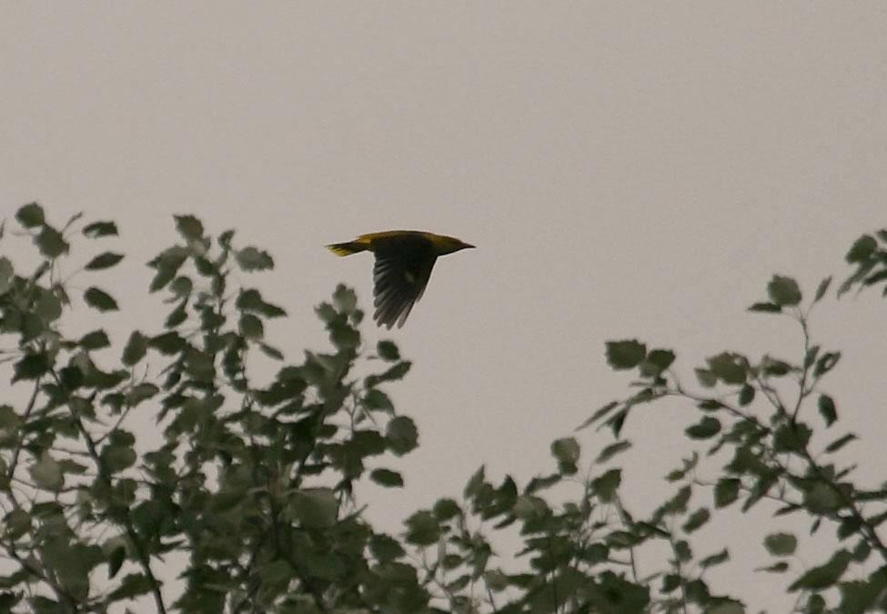 Noch was seltenes und fliegendes