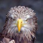 Nochmal der Adler aus ner anderen Blickrichtung