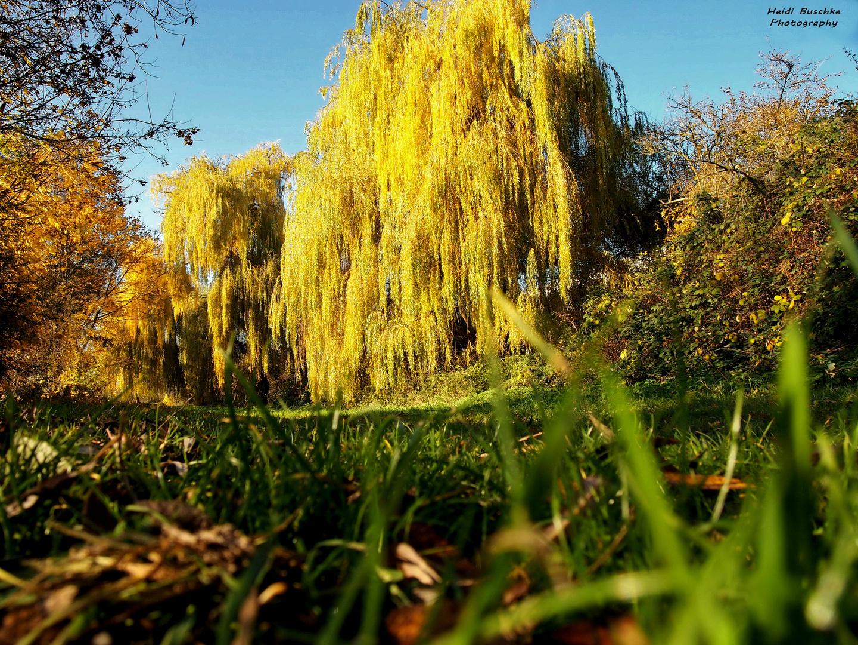.....nochmal ein Herbstbild....