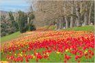 Nochmal ein Tulpenmeer