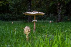 nochmal Pilz