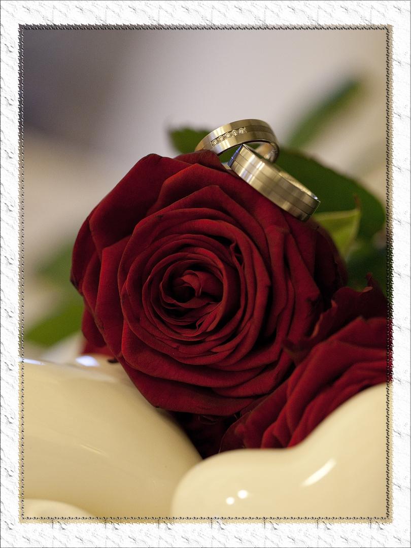 Nochmal ringe auf Rosen..