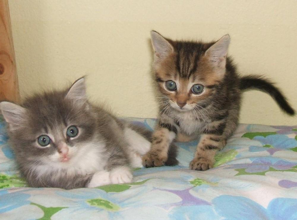 Nochmal süße Katzenbabys Foto & Bild | tiere, tierkinder ...