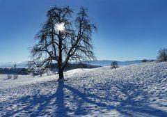 Nochmals etwas Winter