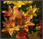 Nochmals Lilien