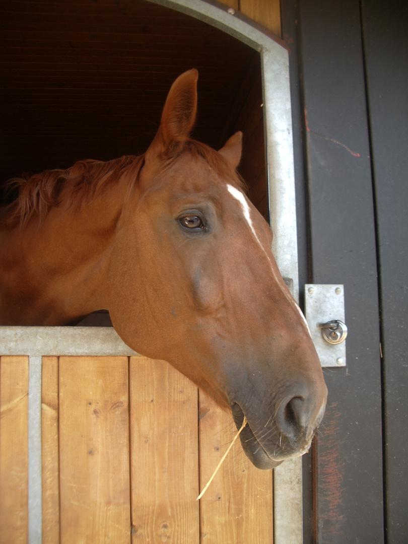 noch´n Pferd