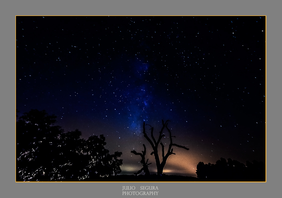 Nocturno y Encina