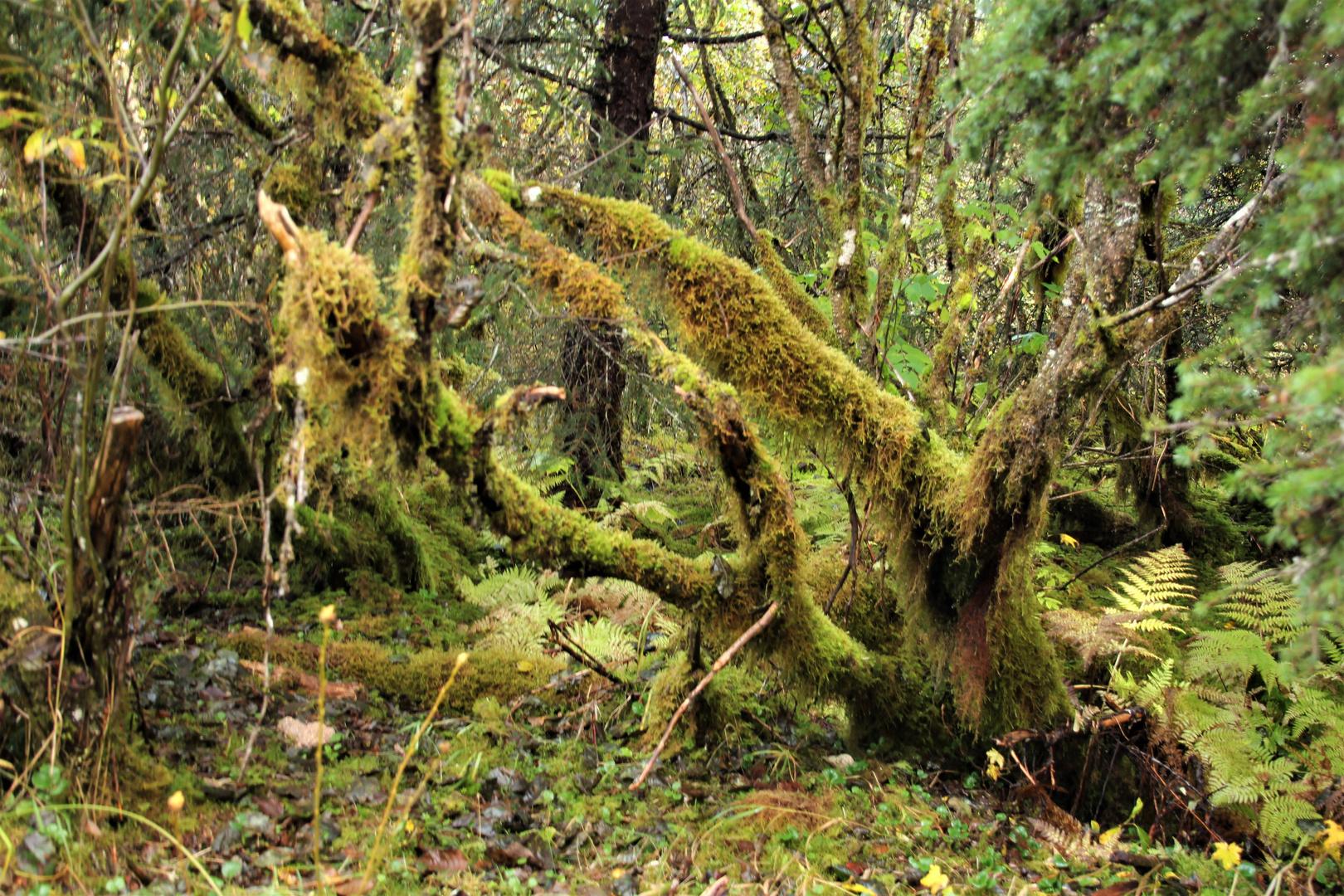 nördlichster urwald der welt foto  bild  alaska natur