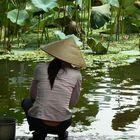 noia vietnamita rentant