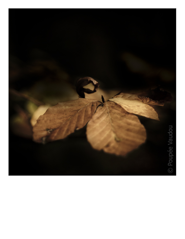 noir automne