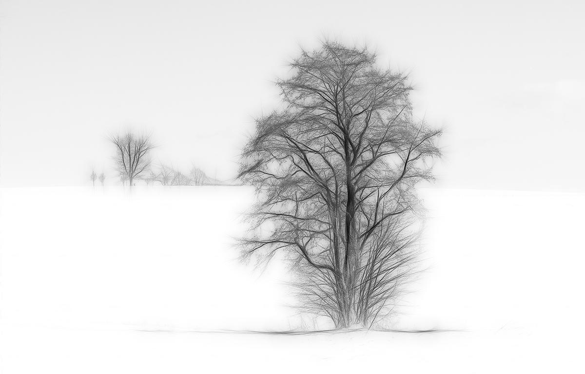Noir sur blanc / Schwarz auf Weiß